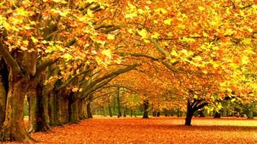 Payızda yarpaqların tökülməsindəki hikmətlər.jpg