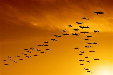 Quşların ağıllı və maraqlı uçuş üsulları.jpg