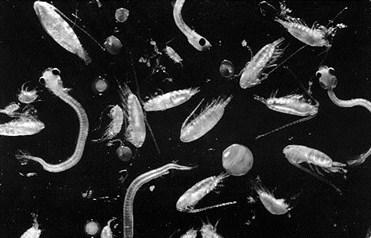 Planktonlar buludların yaranmasında necə rol oynayır ?