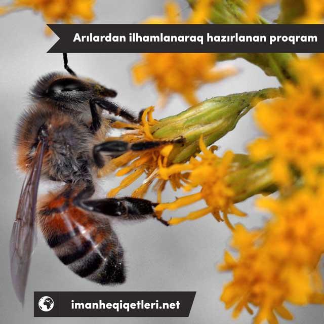 Arılardan ilhamlanaraq hazırlanan proqram